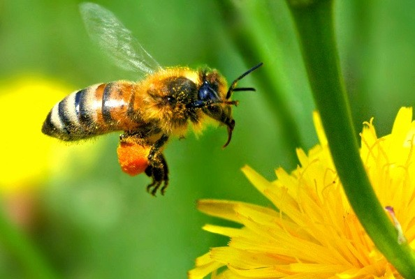 Bee Removal Dallas Expert Bee Removal Aa Bee Removal